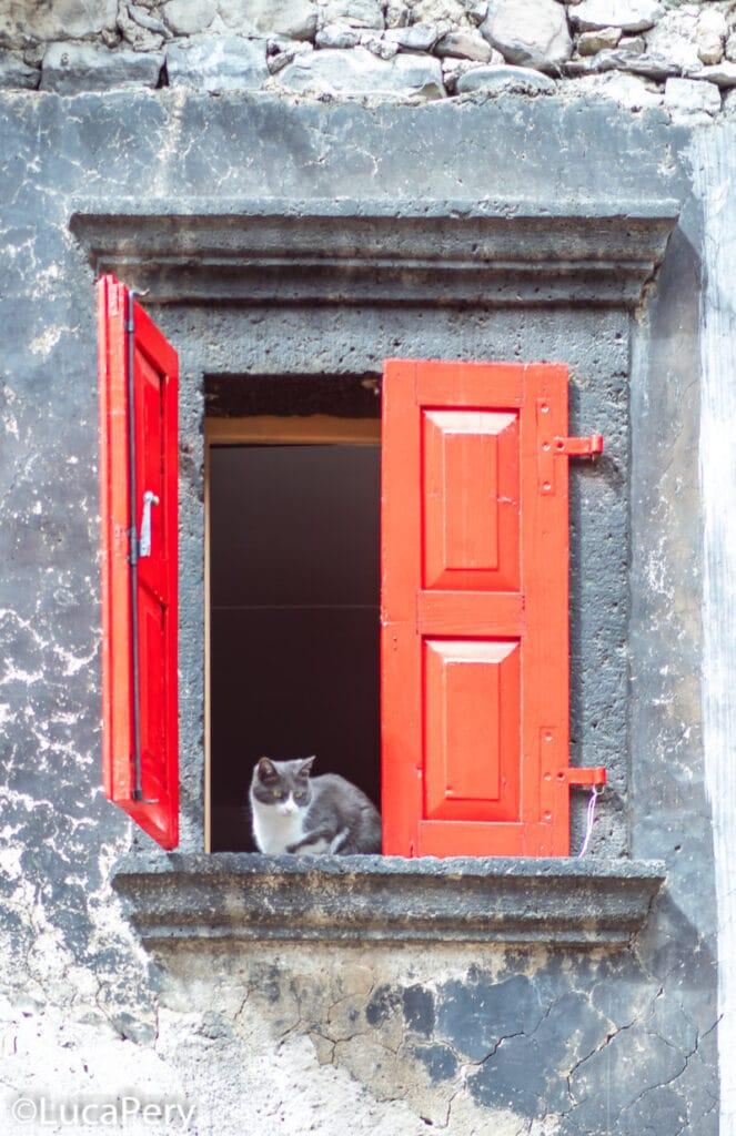 Gatto Pesariis